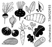 hand drawn doodle vegetables.... | Shutterstock .eps vector #736932955