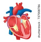 internal structure heart | Shutterstock .eps vector #737008786