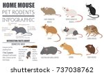 mice breeds icon set flat style ... | Shutterstock .eps vector #737038762
