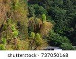 tree bushes   Shutterstock . vector #737050168