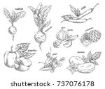 food vegetables isolated... | Shutterstock .eps vector #737076178