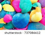 vibrant multicolored seashells | Shutterstock . vector #737086612