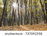 forest landscape sun rays... | Shutterstock . vector #737092558