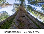 looking up from the base of a... | Shutterstock . vector #737095792