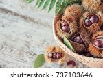chestnuts in the basket on the... | Shutterstock . vector #737103646