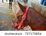 pets on a sunny day on a farm... | Shutterstock . vector #737175856