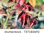 Small photo of autumn leaves | autumn leaf