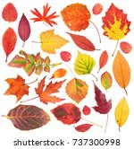 Set Of Different Bright Autumn...