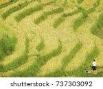 art of rice fields in vietnam.   Shutterstock . vector #737303092