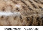 cat's belly hair  tiger pattern ... | Shutterstock . vector #737320282