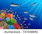 blue marlin fish swimming under ... | Shutterstock . vector #737348896
