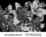 silver lily flower | Shutterstock . vector #737402056