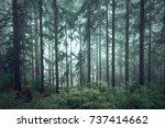mystic green seasonal foggy... | Shutterstock . vector #737414662