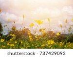 beautiful yellow blooms | Shutterstock . vector #737429092