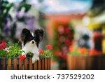 papillon | Shutterstock . vector #737529202
