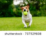 Stock photo happy pet dog playing with ball on green grass lawn 737529838