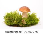 Beautiful Boletus Mushroom On...