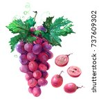 bunch of pink grapes with cut... | Shutterstock . vector #737609302
