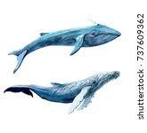blue whales set. watercolor...   Shutterstock . vector #737609362
