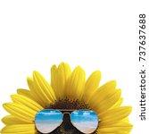 Sunglasses Sunflower Isolated A White - Fine Art prints