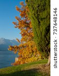 Small photo of Como lake in autumn. Autumn. Glimpse of the landscape of the Como Lake. You can see, see beautiful green garden, tree with yellow leaves, lake and mountains as background