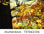 autumn in the city park of riga | Shutterstock . vector #737662156