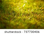 abstract natural background... | Shutterstock . vector #737730406