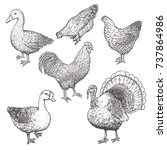 collection of farm poultry.... | Shutterstock .eps vector #737864986