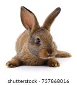 Stock photo small brown rabbit isolated on white background 737868016
