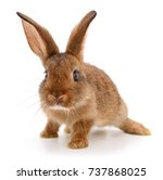 Stock photo small brown rabbit isolated on white background 737868025