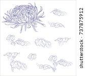 flowers  branches  leaves... | Shutterstock .eps vector #737875912