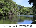 pond at the sir seewoosagur... | Shutterstock . vector #737888932