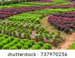 vegetable cultivation. | Shutterstock . vector #737970256