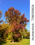 Small photo of Soft colored outdoor fall foliage idyllic landscape photo of a park taken with an american storax tree in the center with red,orange, yellow and green leaves on a sunny autumn day with blue sky