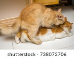mating domestic cats. the... | Shutterstock . vector #738072706