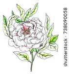 white peony flower blossom.... | Shutterstock . vector #738090058