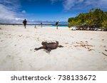 marine iguanas in tortuga bay... | Shutterstock . vector #738133672