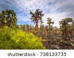 Endemic Cactus trees in Tortuga Bay in Santa Cruz Island, Galapagos Islands, Ecuador