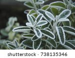 frosty leaves and plants in...   Shutterstock . vector #738135346