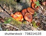 Picking Mushrooms. Mushroom...