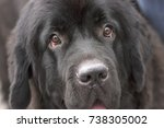 canine look into the camera | Shutterstock . vector #738305002