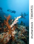 underwater scenery and a diver... | Shutterstock . vector #73834921