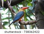 stork billed kingfisher...   Shutterstock . vector #738362422