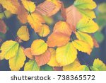yellow  orange and red autumn... | Shutterstock . vector #738365572