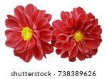 red flowers dahlias on white...   Shutterstock . vector #738389626