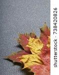 fallen autumn leaves of... | Shutterstock . vector #738420826