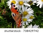 a butterfly  aglais io sitting... | Shutterstock . vector #738429742