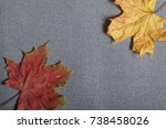 fallen autumn leaves of... | Shutterstock . vector #738458026