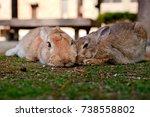 Stock photo cute wild bunny rabbits in japan s rabbit island okunoshima 738558802