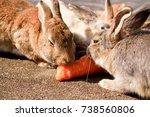 Stock photo cute wild bunny rabbits in japan s rabbit island okunoshima 738560806
